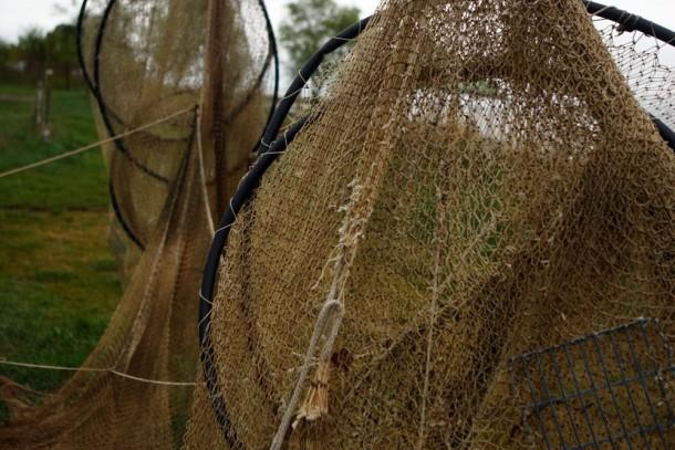 Drying bownets in Neringa, Lithuania. Photo: Patrik Rastenberger