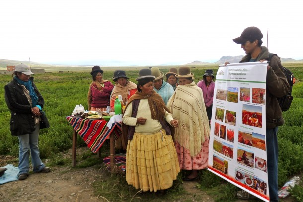 Exploring ways to boost production of underutilized crop species in the Bolivian Andes. Photo: Diakonia