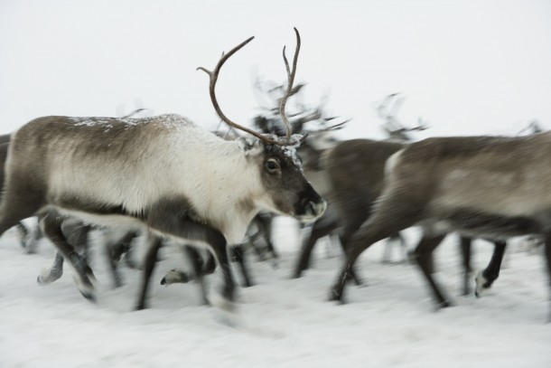A reindeer herding post outside Lovozero will benefit from the project. Photo: Colourbox