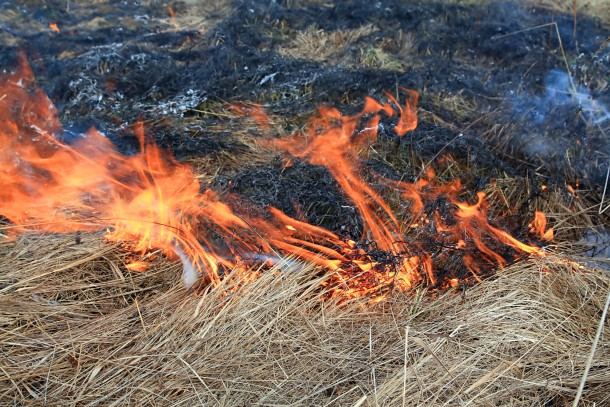 Burning of agricultural residues in Russia affects the Arctic. Photo: Colourbox