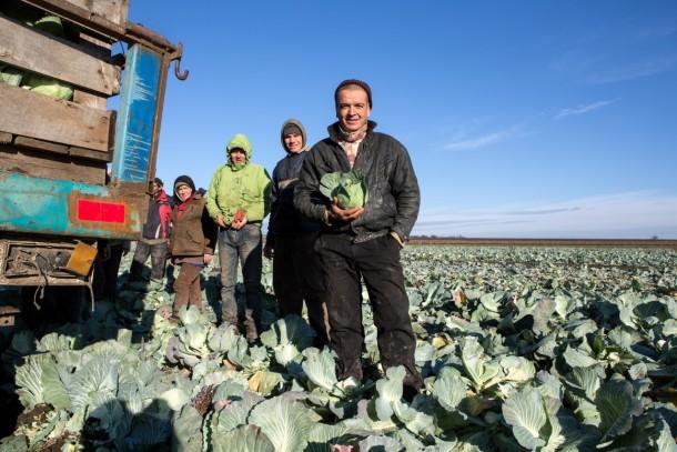 Harvesting cabbage in Myrne. Photo: Patrik Rastenberger
