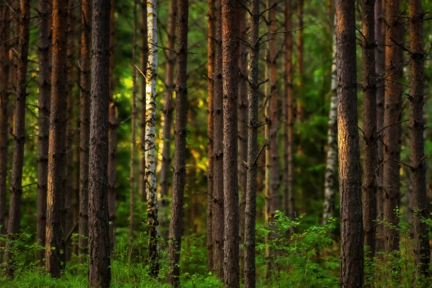 Sustainable forestry and preservation of biodiversity among the approved projects. Photo. Shutterstock/Stefan Holm