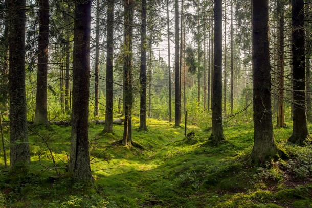 Several of the signed projects are linked to Northwest Russia's forest biodiversity. Photo: Shutterstock